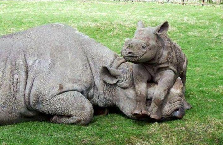 Dont-hurt-my-mom-Rhino
