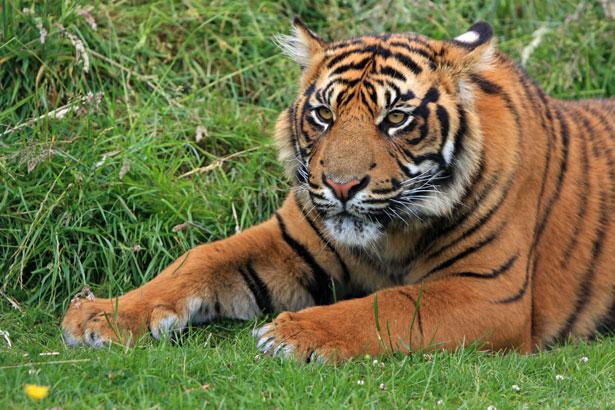 tiger-cub-portrait-1361205160RM0
