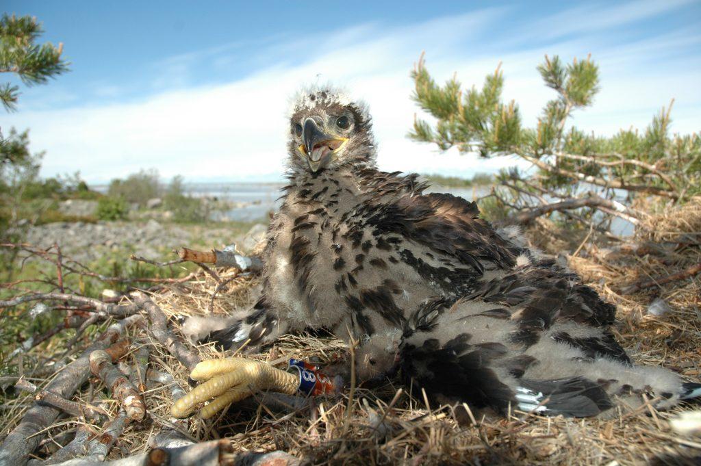 Kuvaaja: Ismo Nuuja/WWF
