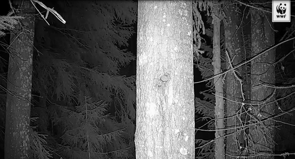 maisema-liito-oravakamerassa-copyright-wwf