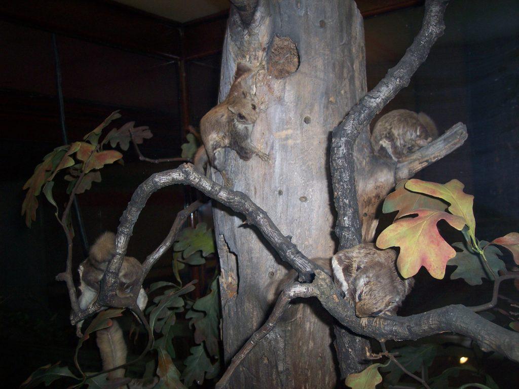 flying-squirrels