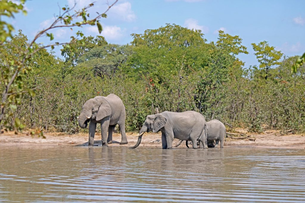 african-elephant-in-water