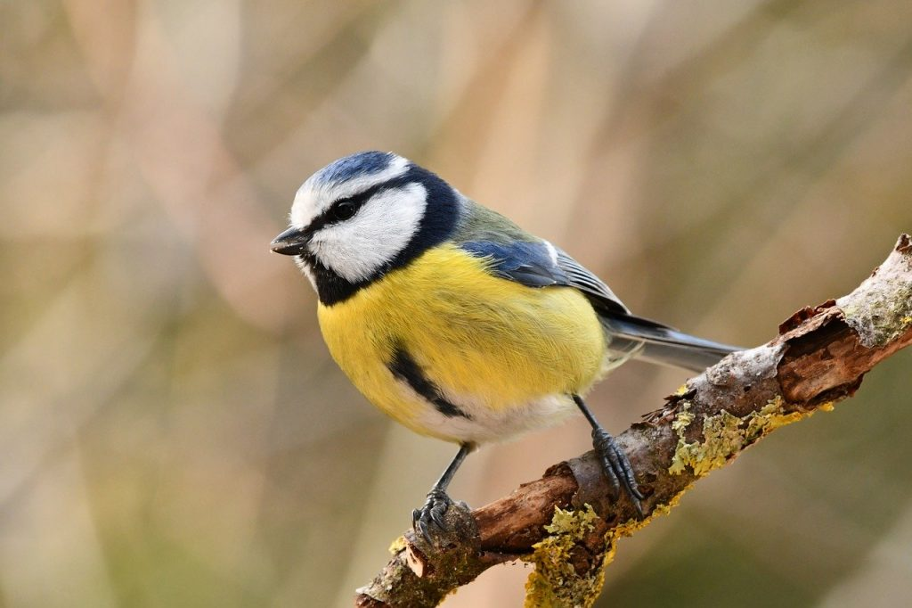 bird-4058195_1280