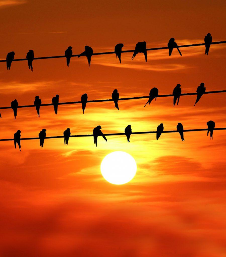 birds-on-wire-sunset-1586943956mdI